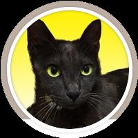 黒猫くぅー