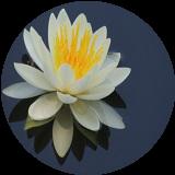 霊場天扉の水葵