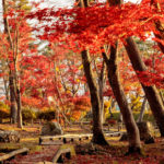 紅葉の夢はこれまでの努力が成熟期を迎えたサイン